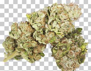 Hulk Kush Cannabis Sativa Strain PNG