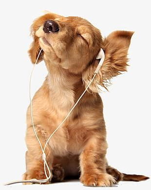 Listen To Music Puppies PNG
