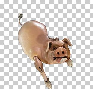 Domestic Pig Cattle Mammal Snout PNG