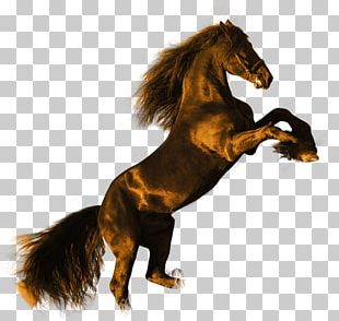 Friesian Horse Stallion High-definition Video Black PNG