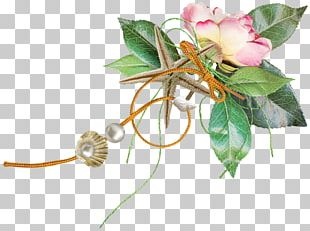 Rose Family Cut Flowers Floristry Plant Stem PNG