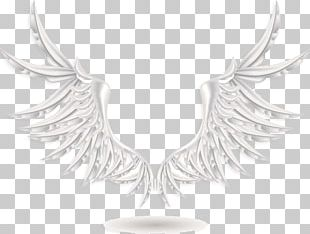 Wing Photography PNG