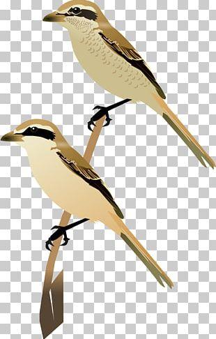 Lark Wren Bird Common Cuckoo Beak PNG