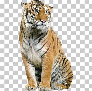 Tiger Editing PicsArt Photo Studio PNG