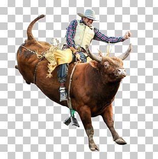 Bull Riding Professional Bull Riders Rodeo Bucking Bull PNG