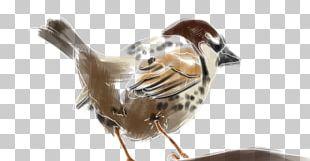 House Sparrow Spanish Sparrow Bird Beak Moineau PNG