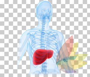 Liver Disease Liver Failure Acetaminophen Hepatotoxicity PNG
