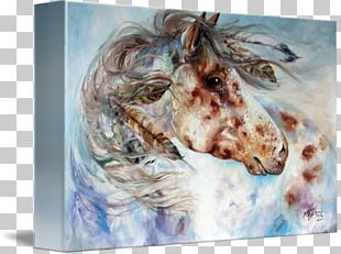 Oil Painting Appaloosa Canvas Print Watercolor Painting PNG