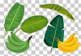 Banana Leaf Sadhya PNG