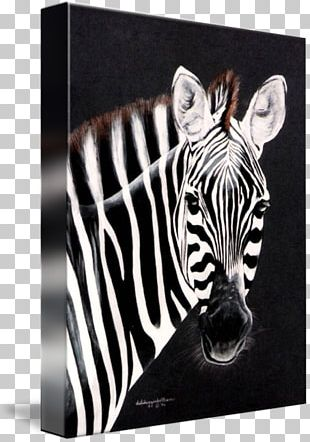 Quagga Watercolor Painting Art Printmaking PNG