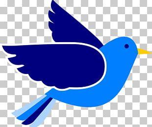 Eastern Bluebird Mountain Bluebird PNG