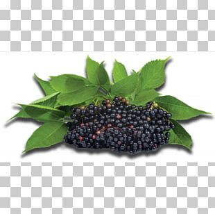 Elder Berry Extract Syrup Juice PNG