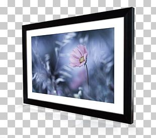 Frames Photography Printing Display Device Canvas Print PNG