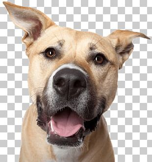 Labrador Retriever Growling Poodle Smile Upside-Down Dogs PNG