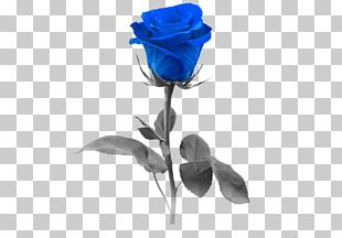 Blue Rose Stock Photography Flower PNG