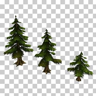 Spruce Low Poly 3D Computer Graphics Christmas Tree Fir PNG