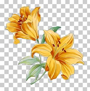 Lilium Flower Watercolor Painting Drawing PNG