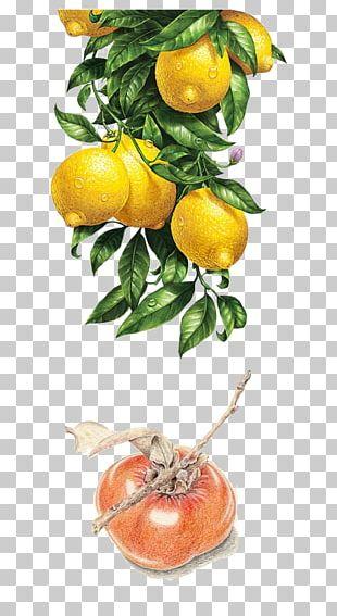 Lemon Watercolor Painting Illustration PNG