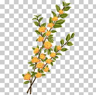 Twig Plant Stem Leaf Flowering Plant PNG