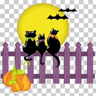 Halloween Cat Jack-o'-lantern PNG