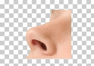 Nose Up PNG