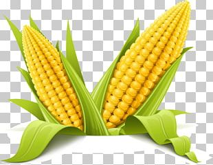 Corn On The Cob Maize Corncob PNG