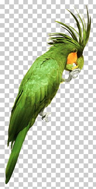 Parrot Bird Watercolor: Flowers Watercolor Painting PNG