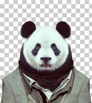 Zoo Portraits Visual Arts Dog Giant Panda PNG