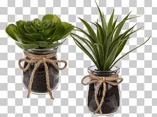 Succulent Plant Artificial Flower Glass Ceramic PNG