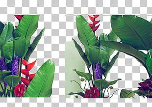 Leaf Green Seedling PNG