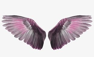 Wings To Fly PNG