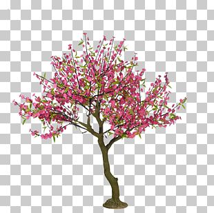 Cherry Blossom Tree Drawing Peach PNG