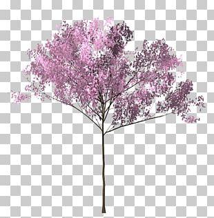 Cherry Blossom Tree Twig PNG