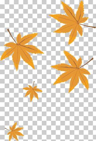 Leaf Cartoon PNG
