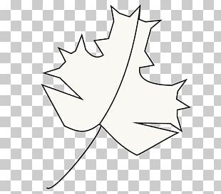 Maple Leaf Plant Stem Line Art PNG