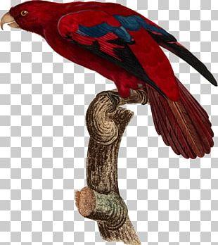 Bird Parrot Beak Feather Animal PNG