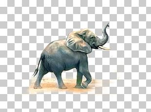 African Elephant Indian Elephant PNG