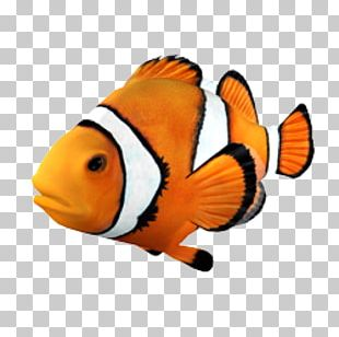 Goldfish Clownfish Angelfish Tropical Fish PNG