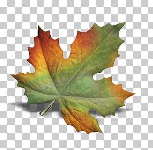 POINT CEDRIC INFORMATIQUE Autumn Leaves Leaf PNG