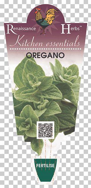 Romaine Lettuce Spring Greens Leaf Herb PNG