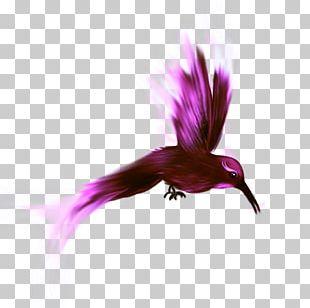 Bird Nest Parrot Beak PNG