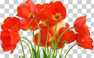 Love Flower Stock Photography Desktop PNG