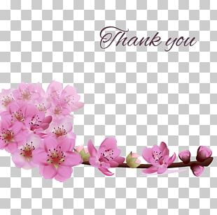 Flower Greeting Card Stock Photography PNG