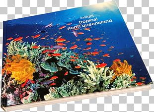 Coral Reef Fish Ecosystem Marine Biology PNG