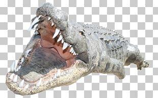 Crocodile PNG