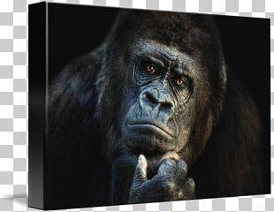 Ape Gorilla Orangutan Chimpanzee Drawing PNG, Clipart