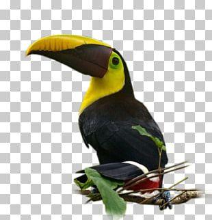 Bird Nom D'oiseau Parakeet Beak Feather PNG