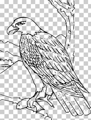 Bald Eagle Coloring Book Drawing PNG