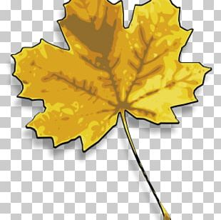 Maple Leaf Yellow Japanese Maple Drawing PNG