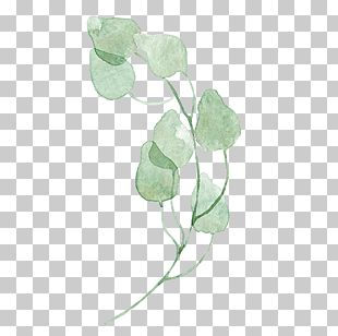 Leaf Green Watercolor Painting PNG